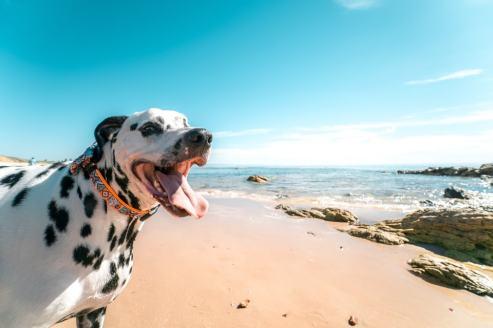 Top-Pet • Le poil du chien : en été
