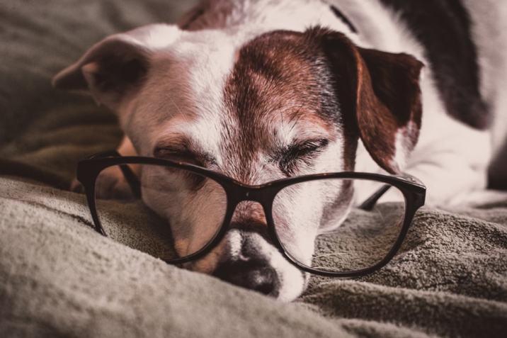 Top-Pet • Les sens du chien : la vue