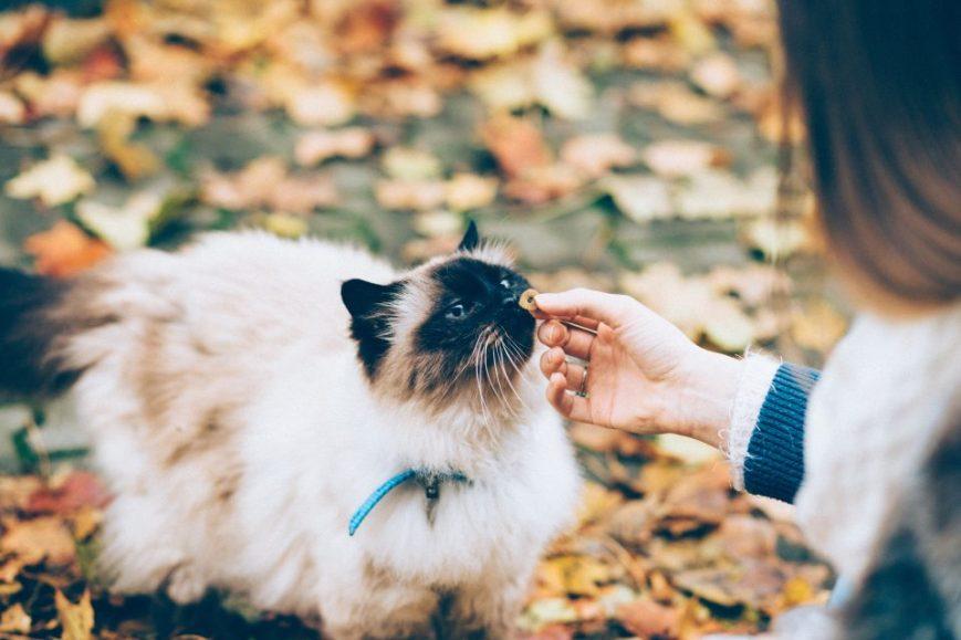 Top-Pet, prendre soin des animaux