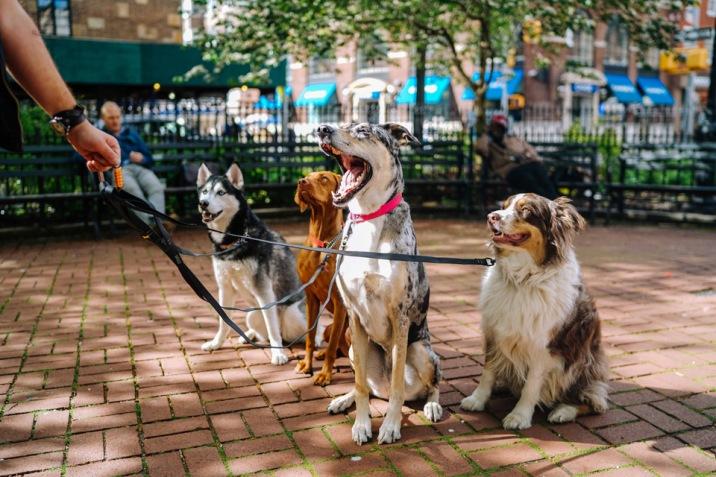 Parcs interdits aux chiens de moins de 3 ans !